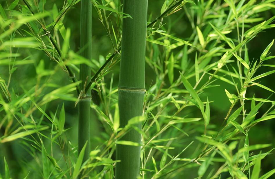竹子植物建筑手绘