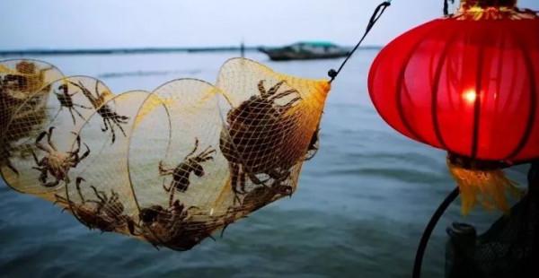 阳澄湖大闸蟹开捕,150个城市24小时到货,死蟹包赔,京东竟这样玩冷链